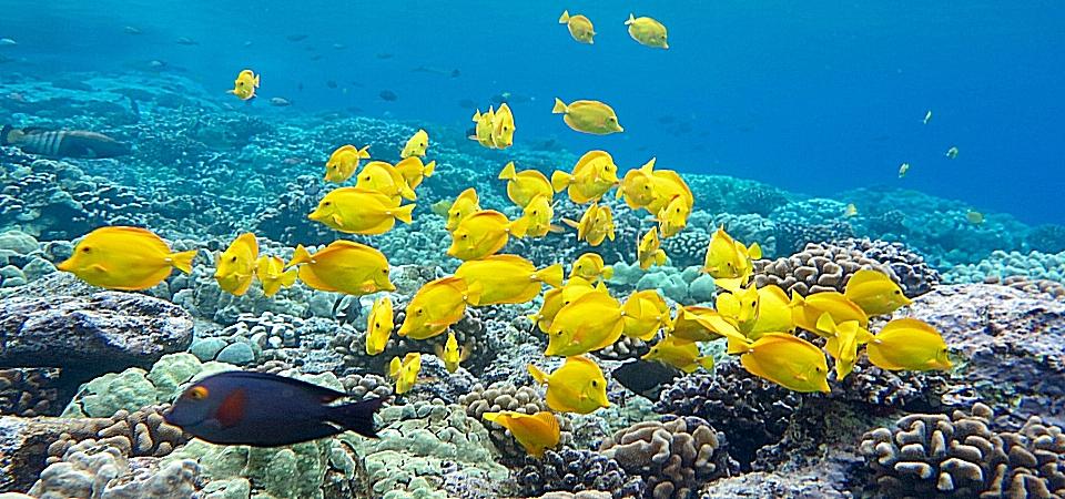 snorkel_kona_hawaii%20(34)[1].jpg