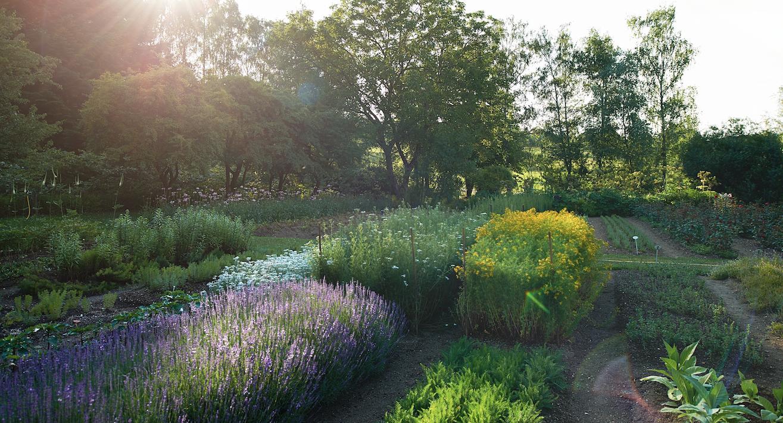Dr. Hauschka/WALA biodynamic medicinal plant gardens