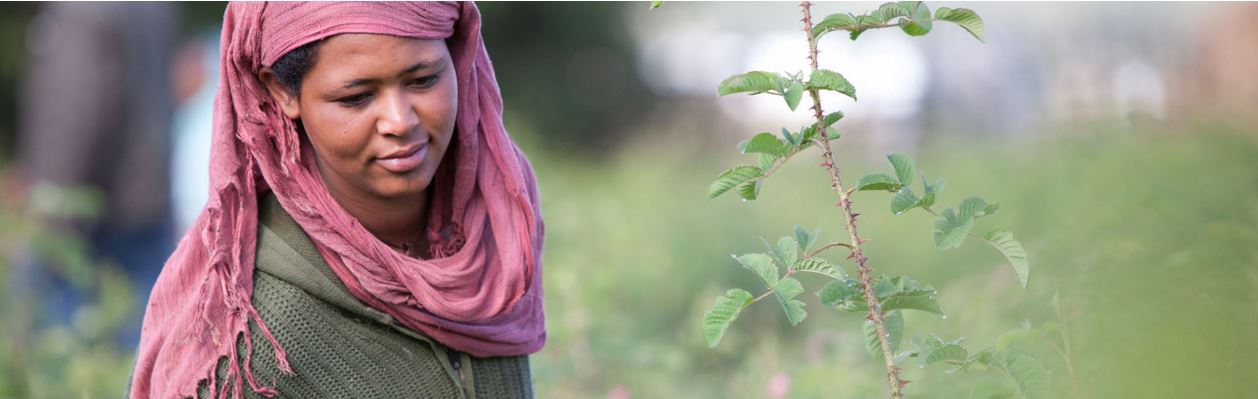 lady with pink head scarf.JPG
