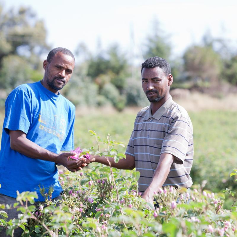 rose ethiopia 2.png