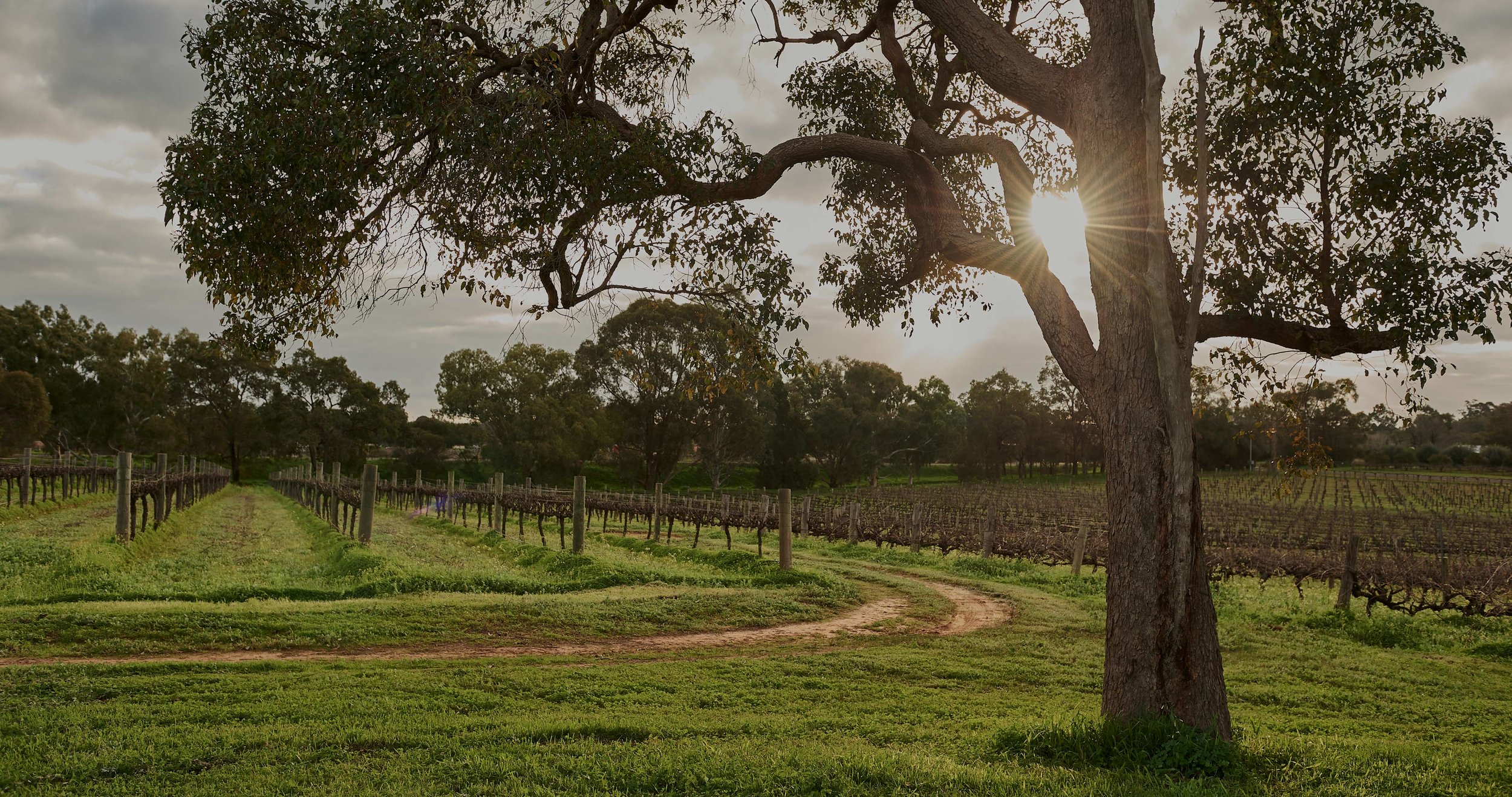 Find us under the Marri tree. There's the perfect conditions for growing grapes. Drinking them too.   Corymbia. The nature of wine.