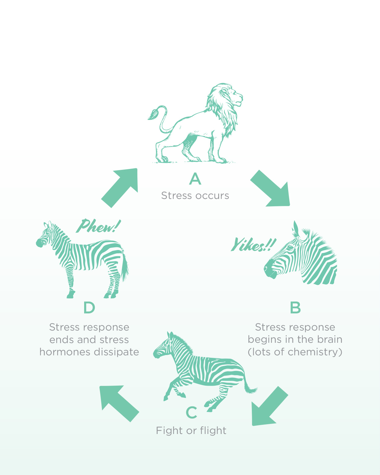 Figure 1: Normal Short-Term Stress. Why Zebras don't get Ulcers, by Robert M. Sapolsky.