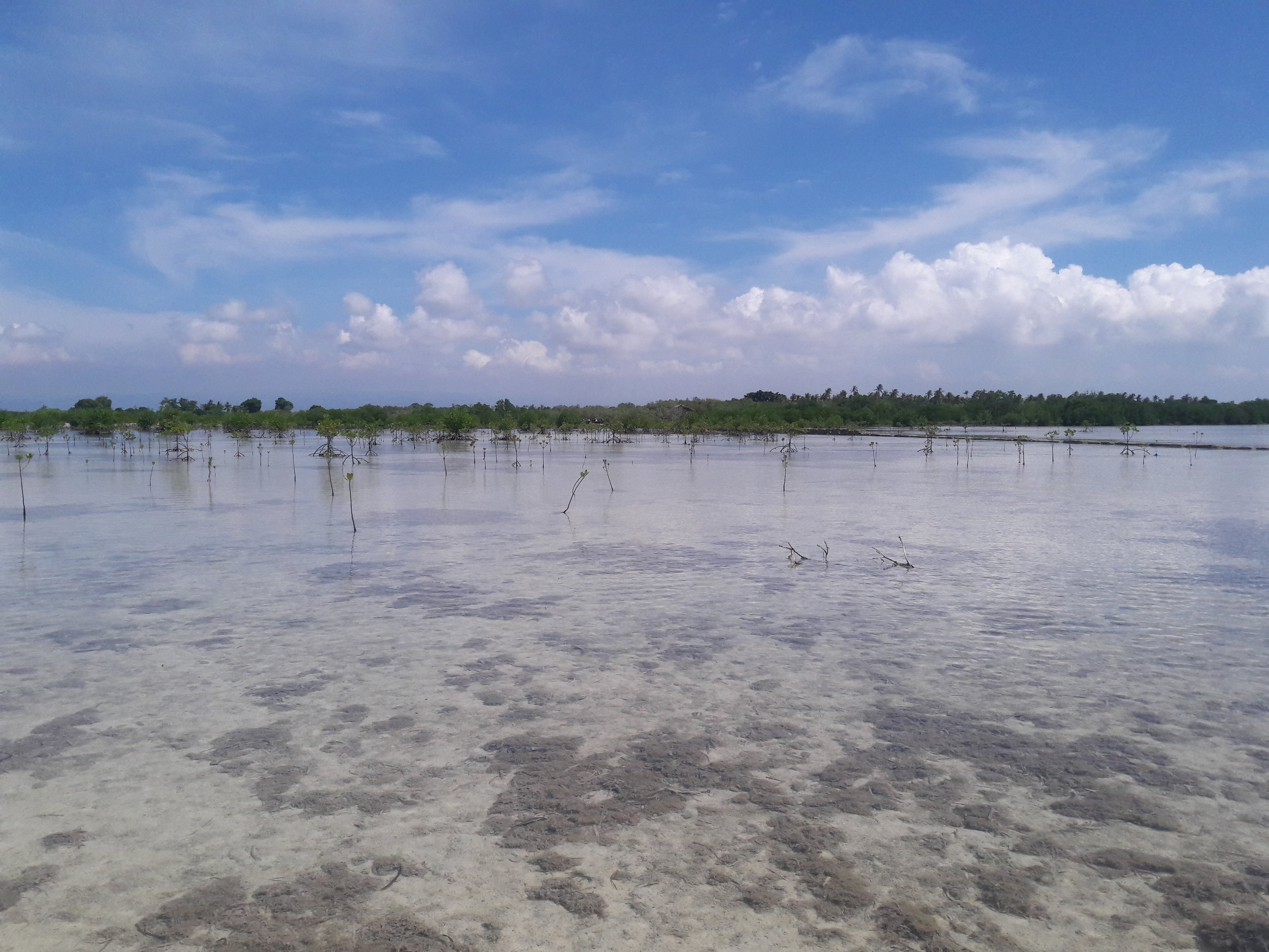 Mangroves, like these, in the Olango Island Wildlife Sanctuary in Cebu, play an important role in the ecosystem, serving as biodiversity protection, among other benefits.