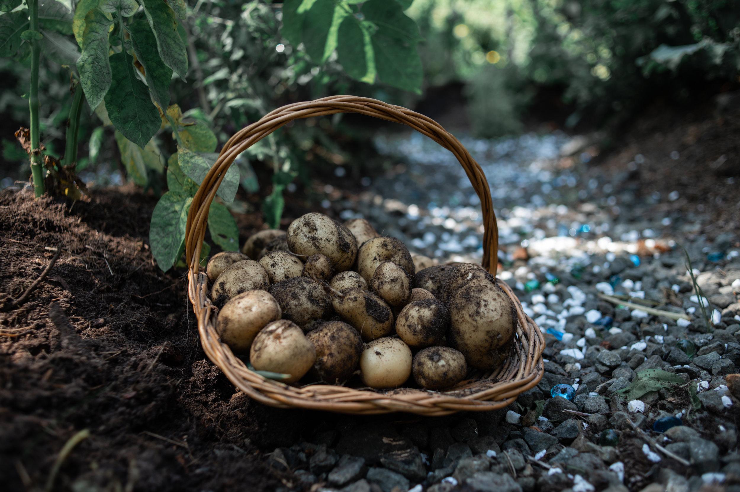 August Harvest-9966.jpg