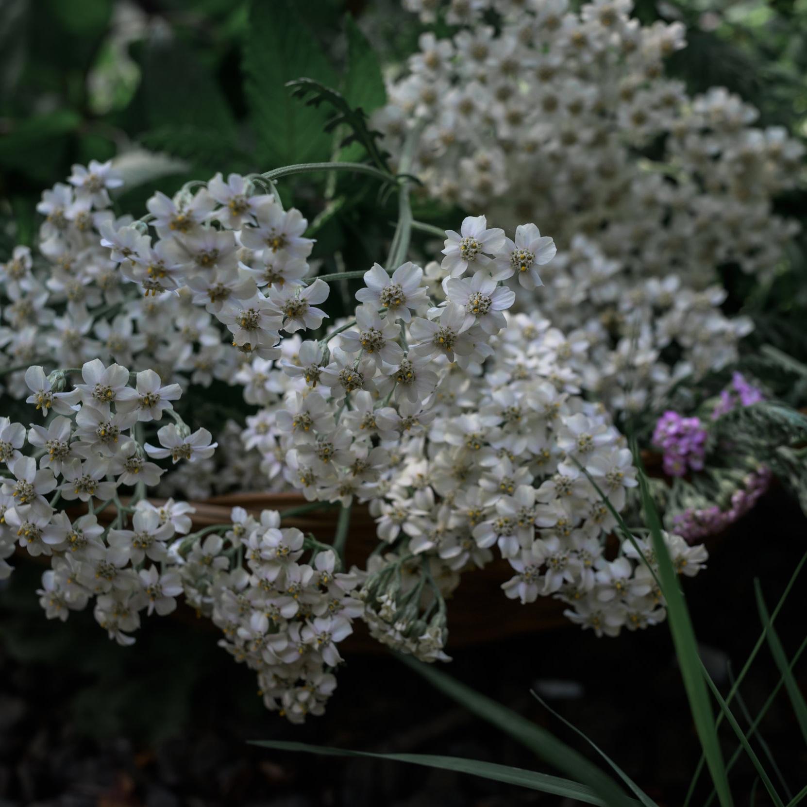 August+Harvest-9999.jpg