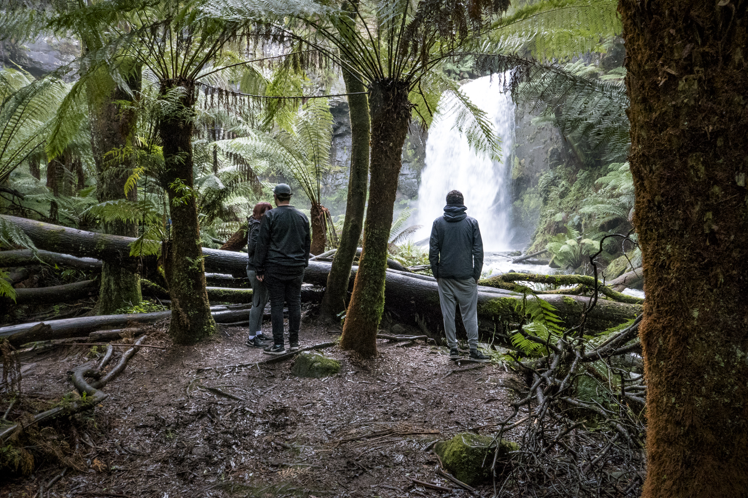 Visitors carve out paths and sections of the landscape. The small ferns are non existent, and the moss covered logs are used for selfies.