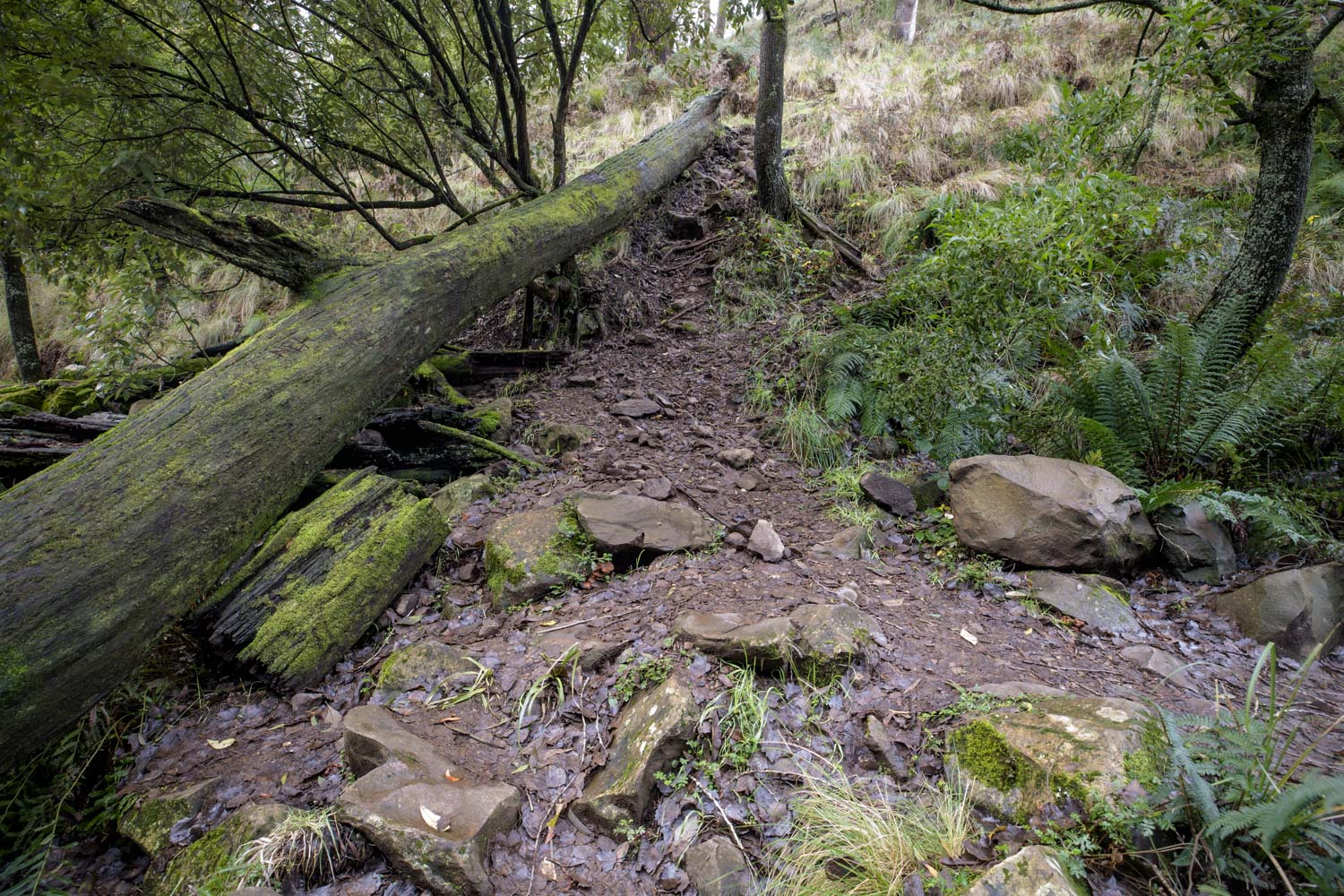This is the spot I originally took my image from in 2016. The area has now been cleared and almost not trace of the ferns and moss that lined my photograph.
