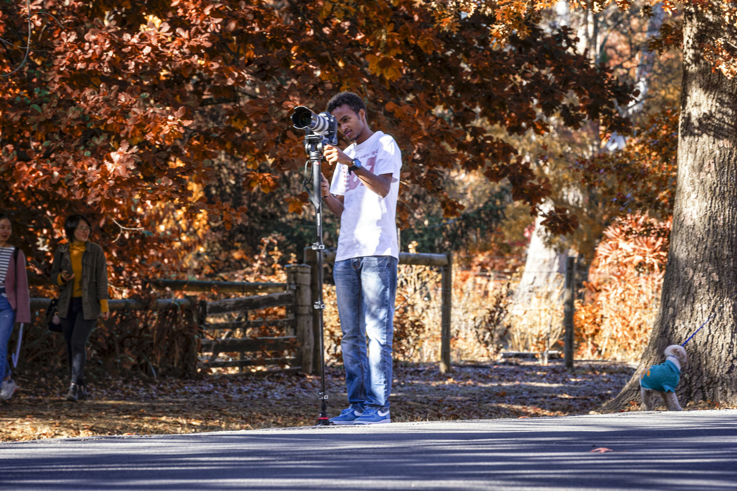 Photographers come from across Victoria all to get those picturesque images of the rich red autumn leaves.