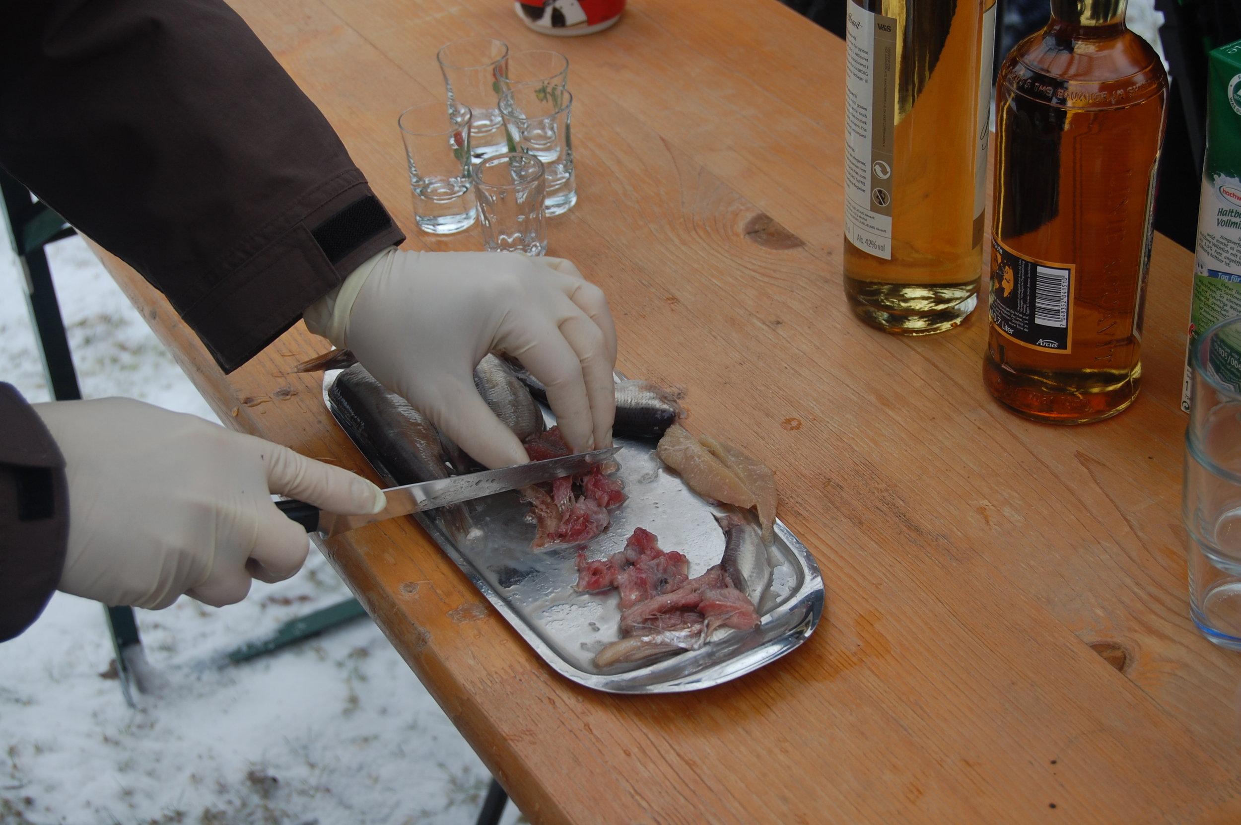 Preparando para realizar Surströmming