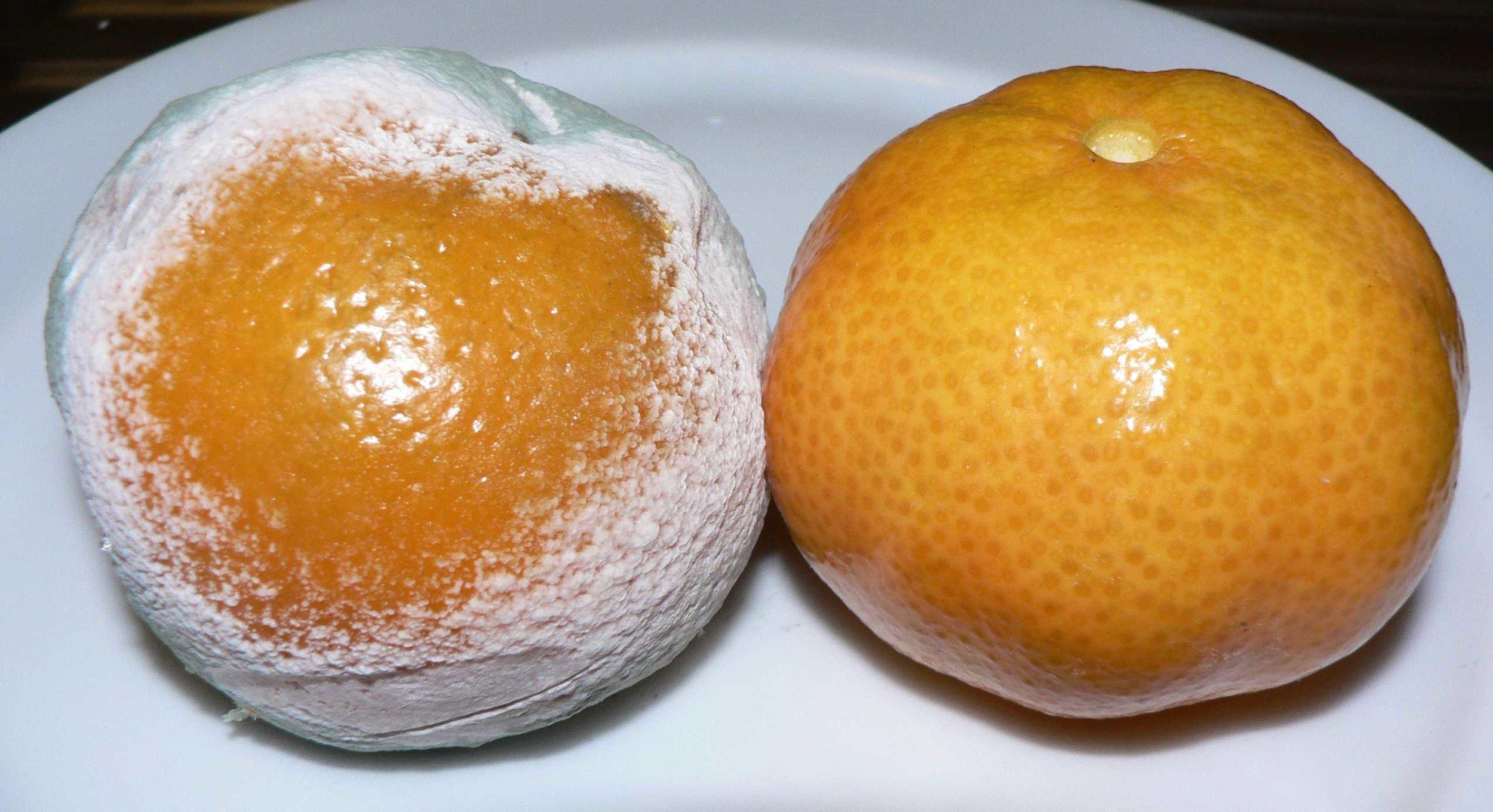 Mandarina infectada con penicillum