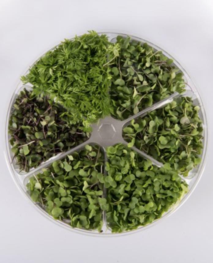 Spicy Salad Mix -