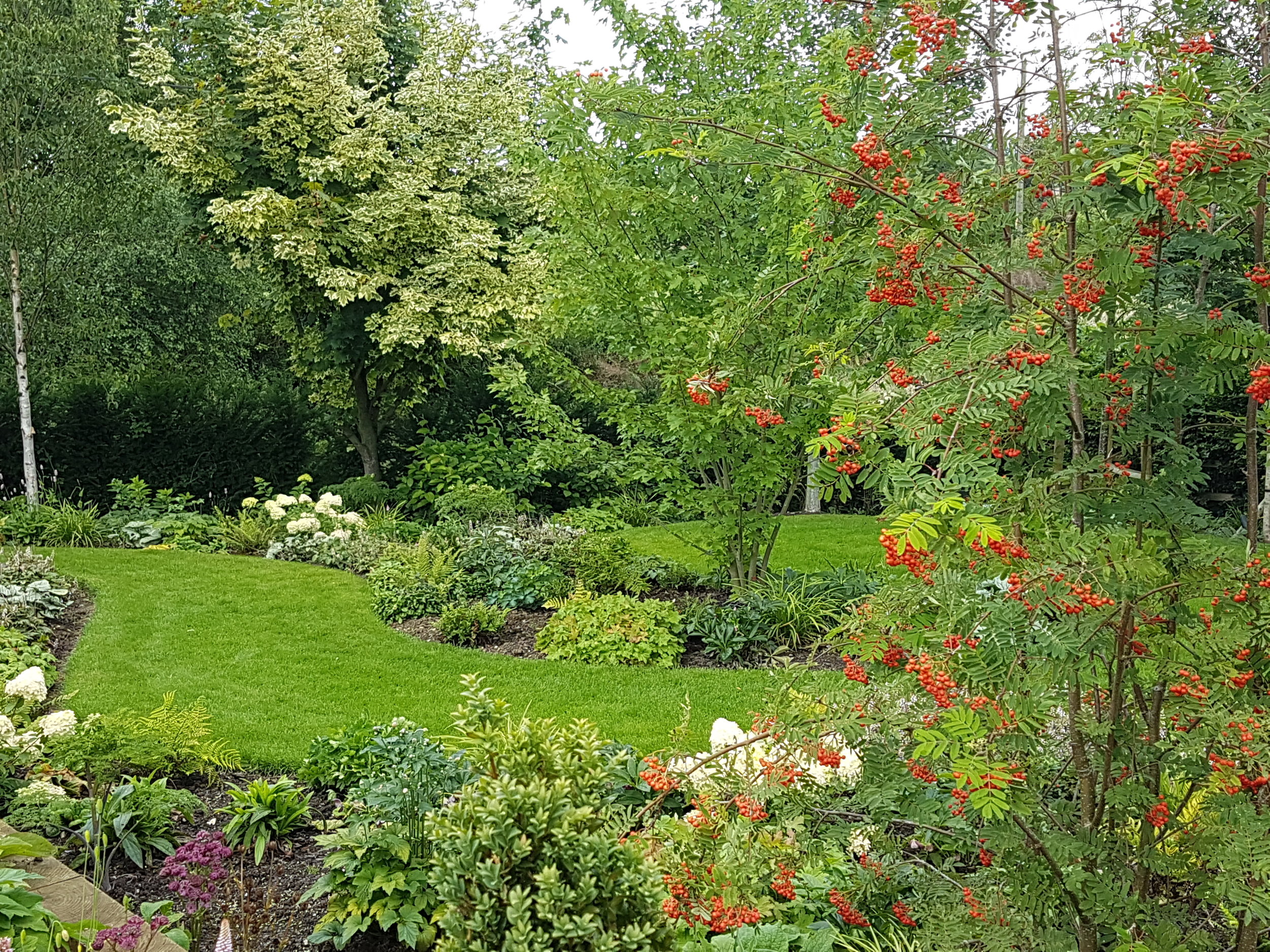 Sorbus aucuparia multistem in foreground with Acer 'Autumn Fire' multistem behind, in one of Elspeth's woodland designs.jpg