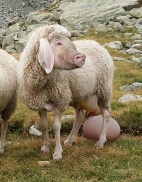 Die eierlegende Wollmilchsau  ;-)