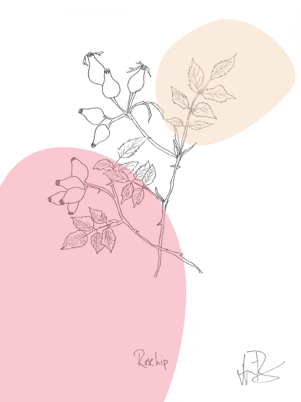 rosehip.color-01.jpg