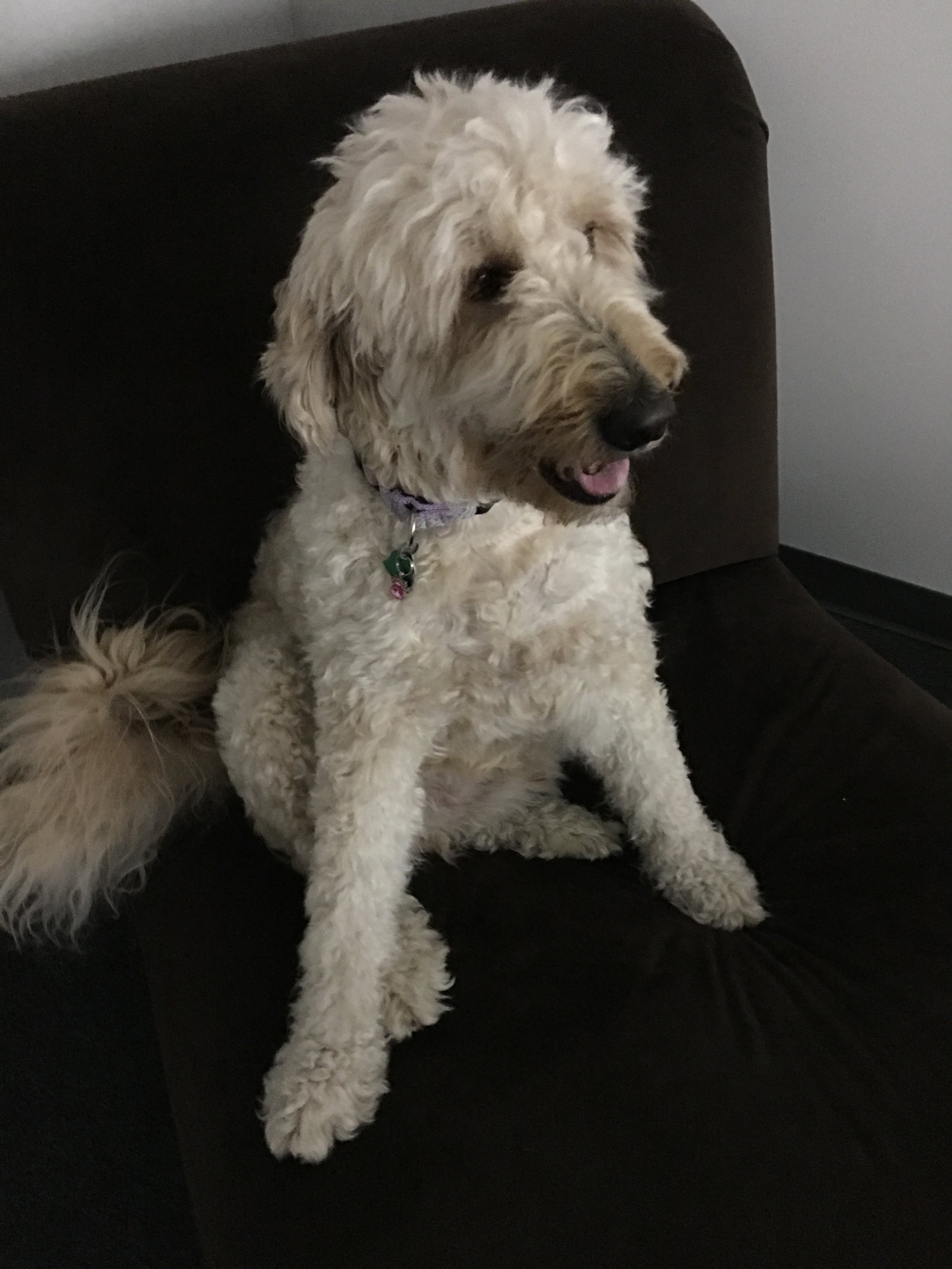 Barry the dog.jpg