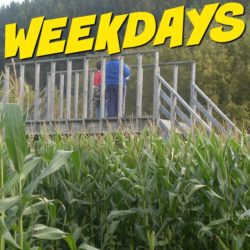 Weekdays-Square-2-250x250.jpg