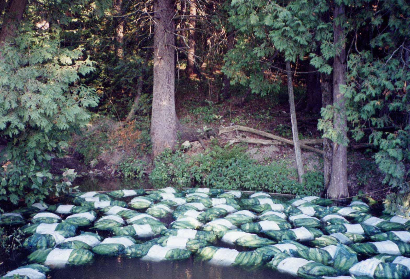 hydrocool corn in pond.jpg