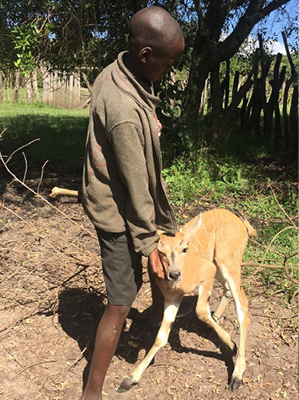 This baby eland was found by the community
