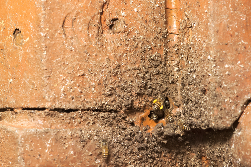Sealing cracks helps prevent wasp infestation