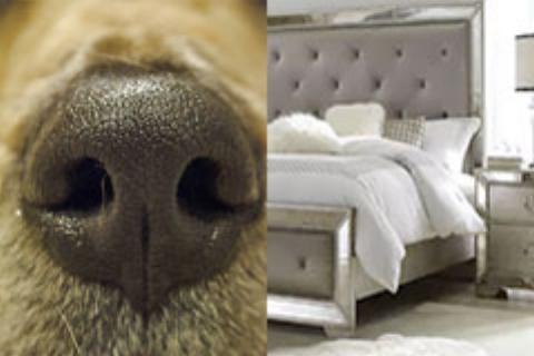 k9_bed_bug_inspection_canine.jpg