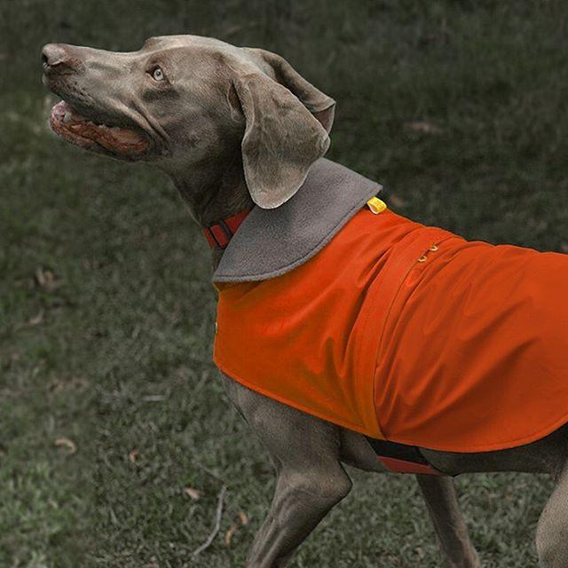 Busca tu #match perfecto con ellos 🐕🏃♂️🏃🏻♀️ . Por la compra de tu #impermeable , llévate gratis un #buff ilustrado 💥 . Encuéntranos en nuestros puntos de venta @thepetcompany_ec y @mypawhouse.ec ✨ o en nuestra tienda en línea en Facebook. . #bro #siempreconmibro #bro4pets #raincoat #dogwear #dogfashion #petfashion #impermeable #quito #colddays