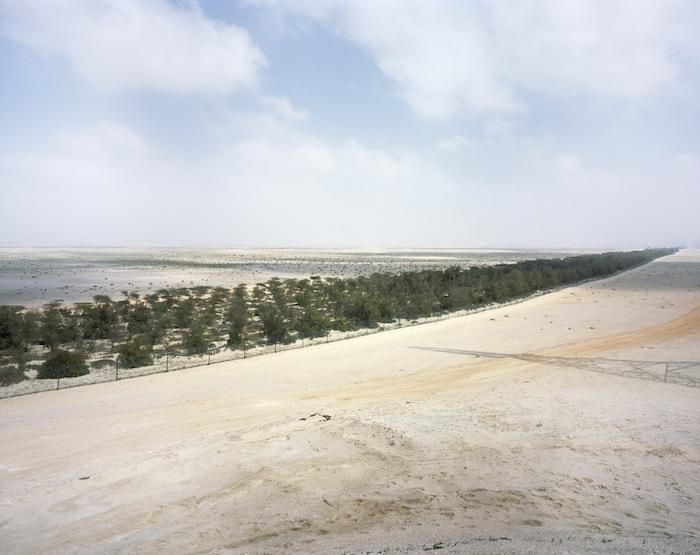 8_Forestry+project_Western+Region_Abu+Dhabi.jpg
