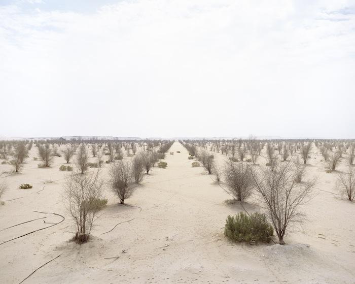 11_Forestry+project_Western+Region_Abu+Dhabi.jpg