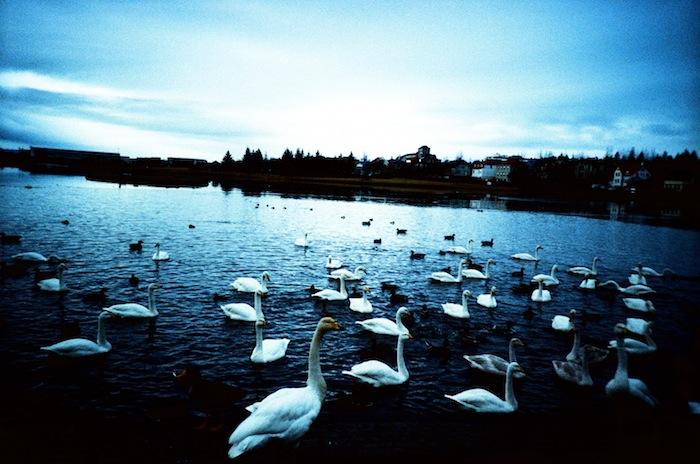 Reykjavik+Lake+03_Hind+Mezaina.jpg