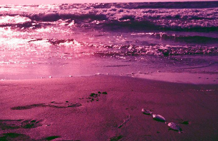 David+Elalouf_Pink+Beach+04.jpg
