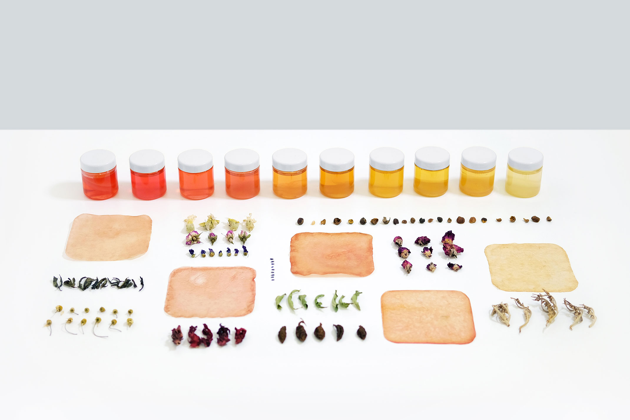 Amman Zedani,  non-human-assembly , 2018 | Biofilms, community of bacteria and yeasts, lavender, roselle, melissa, chamomile, coffee husk, chaste tree, tea, mixed flowers, red rose and black cardamom | dimensions variable | Commissioned by Sharjah Art Foundation | Courtesy of the artist.