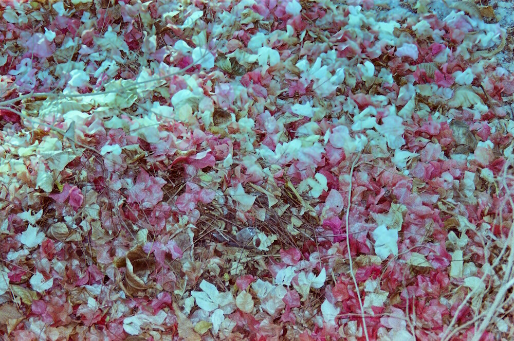 Photo Diary_Hind Mezaina_October_21.jpg