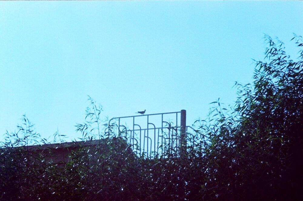 Photo Diary_Hind Mezaina_October_30.jpg