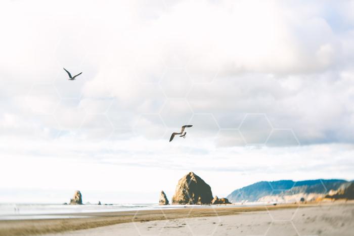February_at_the_Beach-1271.jpg