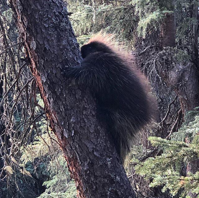 Last #hike of the season. Gonna miss this place. #porcupine #hiking #alaska #hikealaska