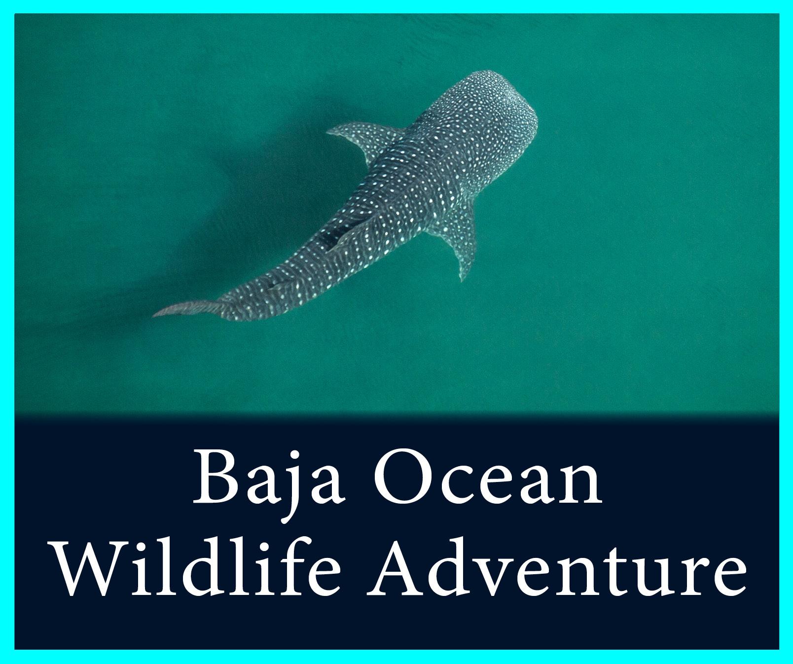 Baja Ocean Wildlife.jpg