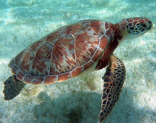 Belize Ocean Wildlife: Day By Day Slideshow