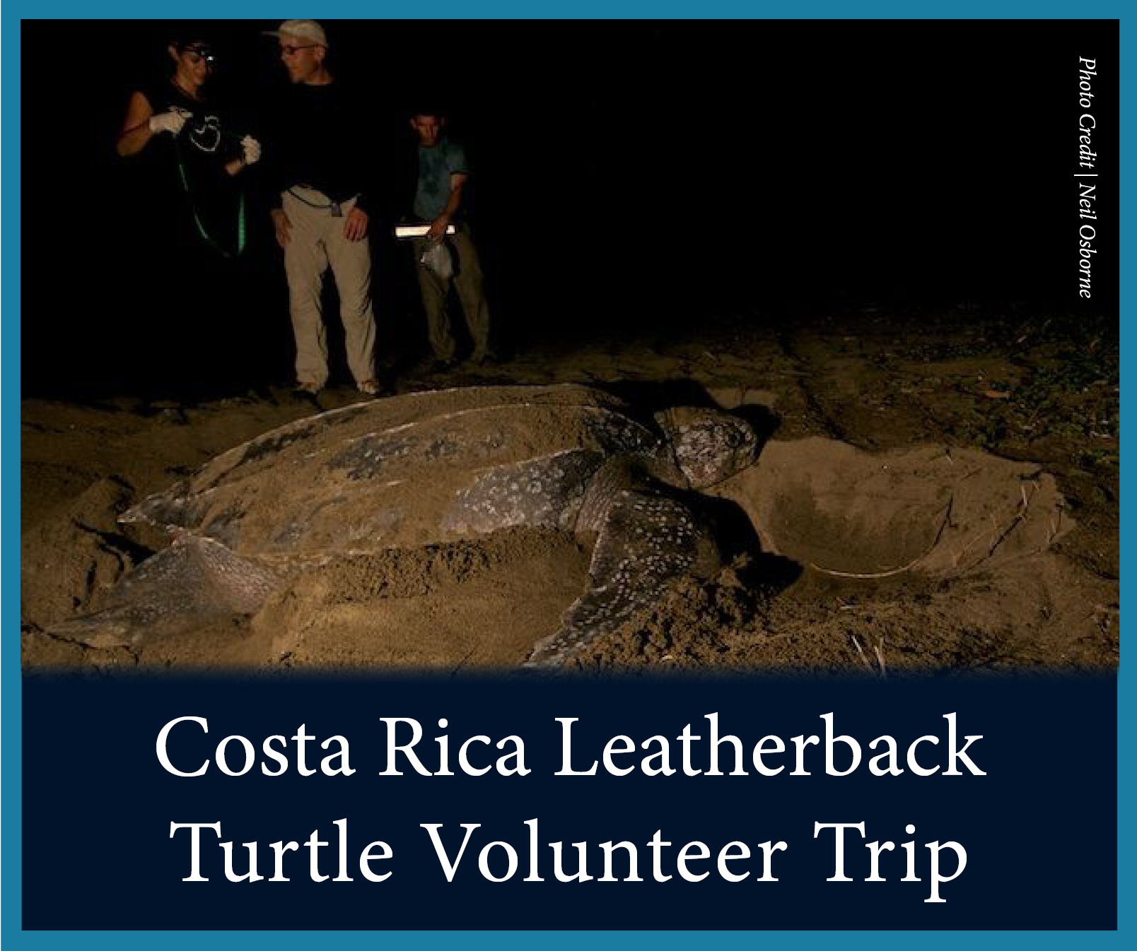 Costa Rica Leatherbacks.png