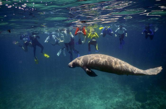 Day 5: Hol Chan Marine Reserve: Visit this unique reserve to snorkel and look for turtles, manatees, coral reefs, and more