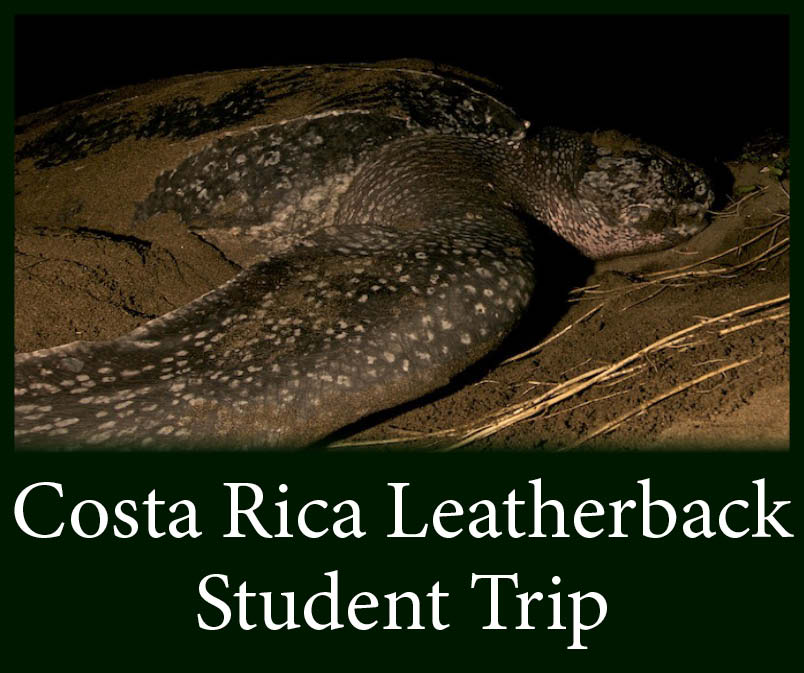 Costa Rica Leatherback Students.jpg