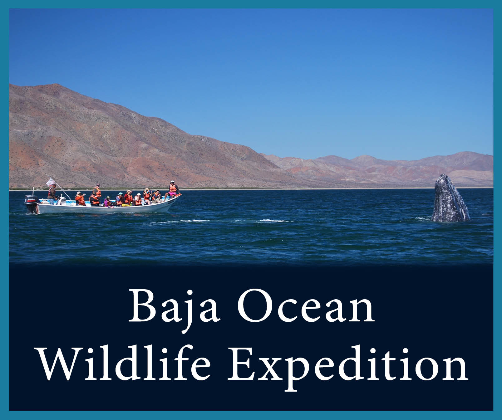 Baja Ocean Wildlife 2.jpg
