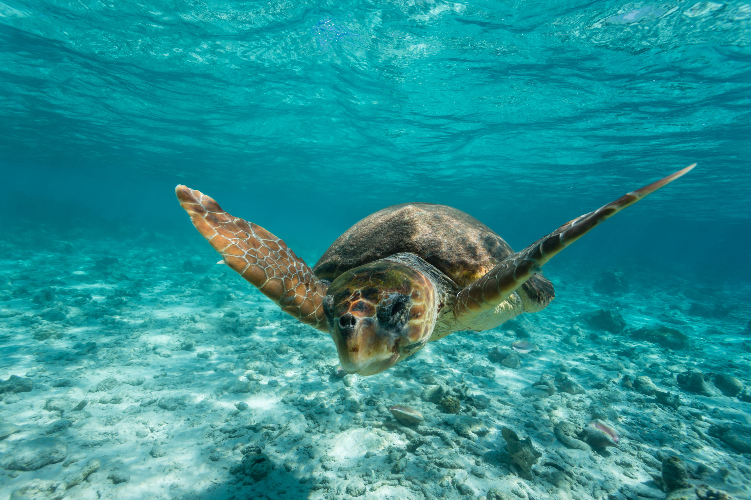 Belize Ocean Wildlife
