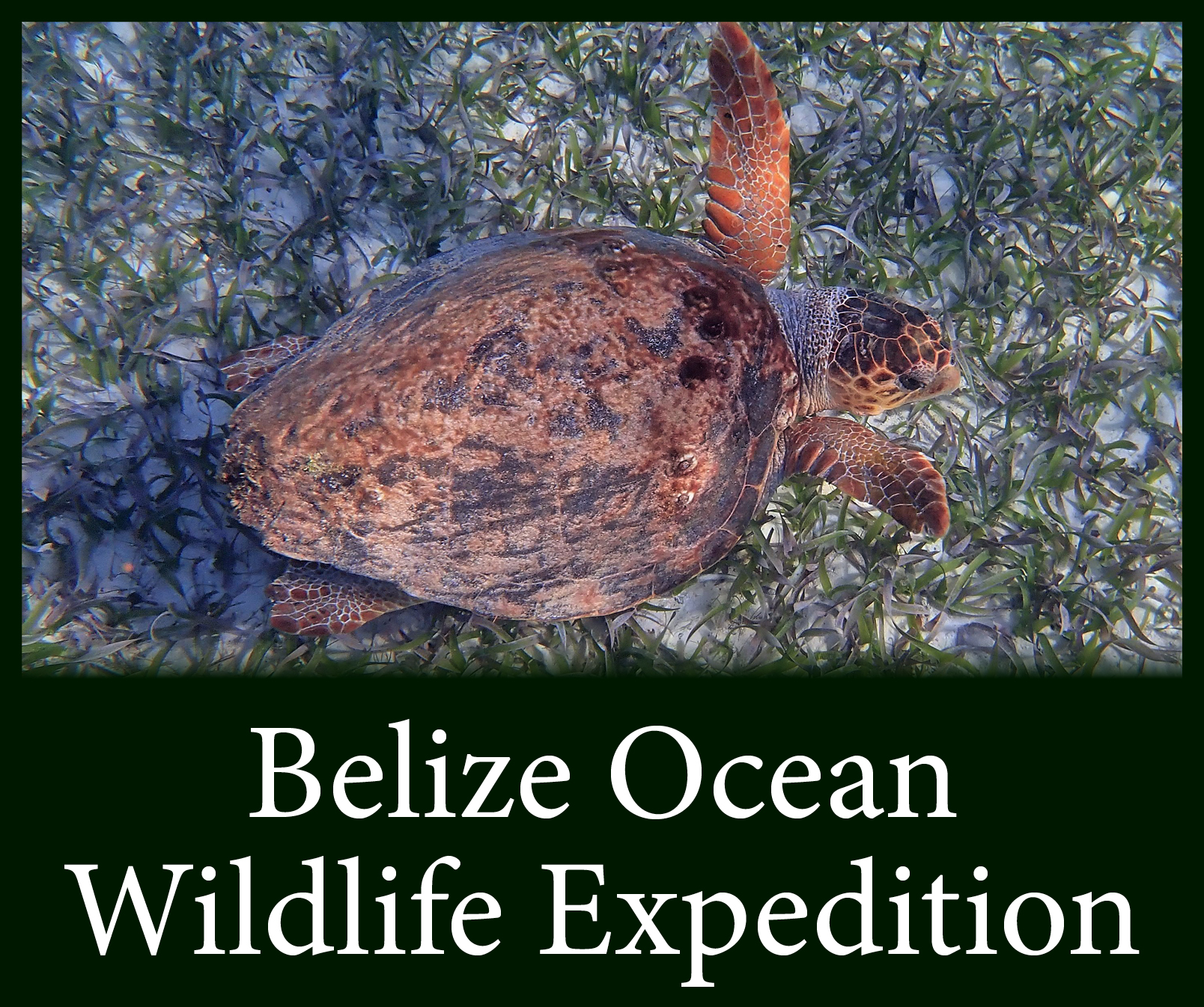 Belize Button 2.jpg