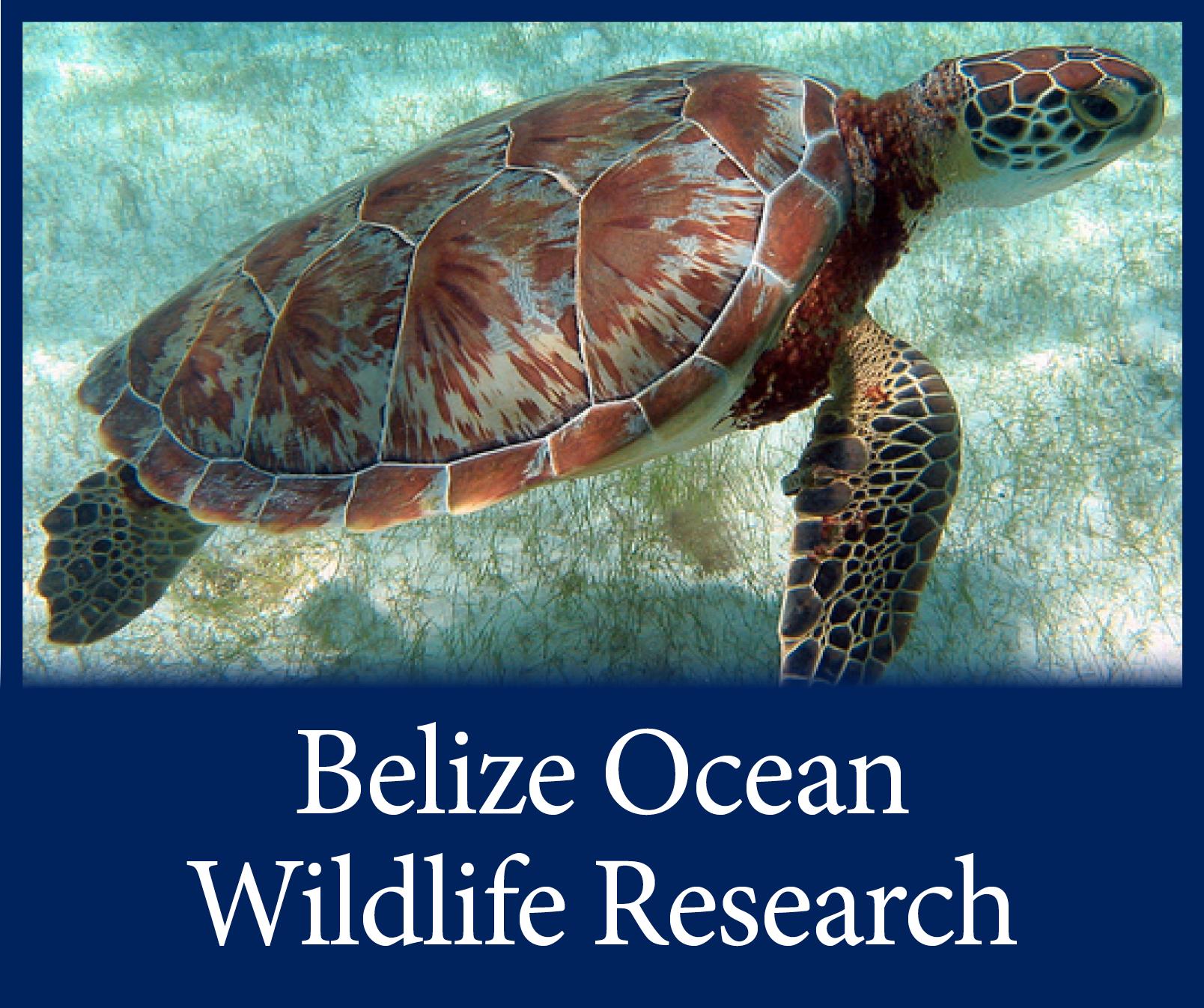 Belize Trip Button.png