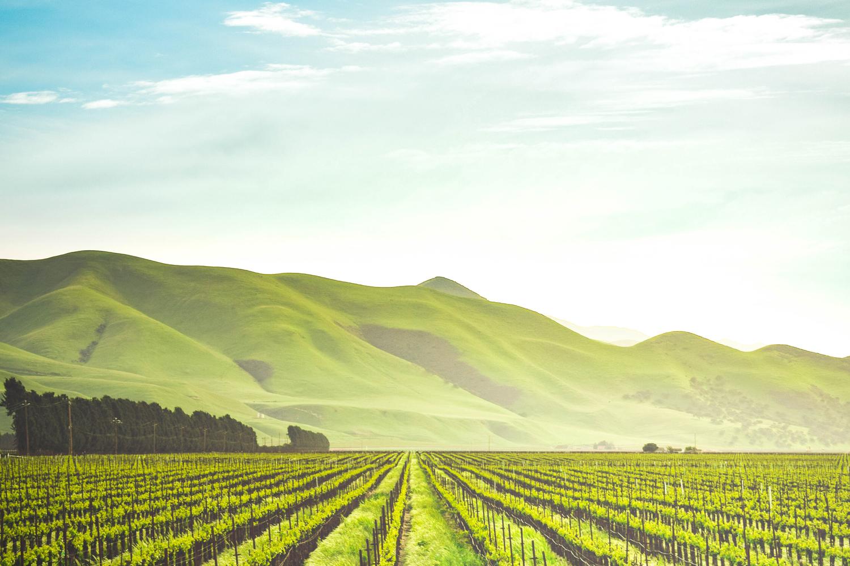 wineyard.jpg