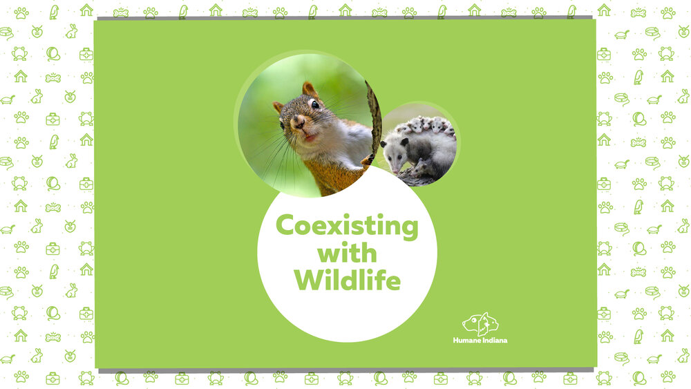 April-Coexisting-with-Wildlife_fb-event.jpg