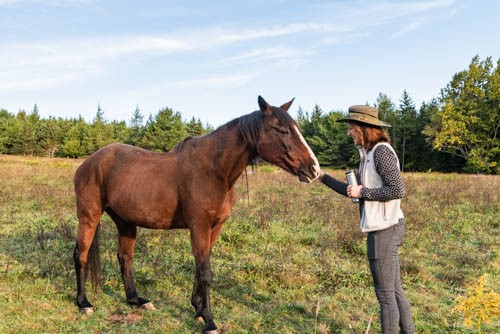 Dr. Karen King interacts with a horse. Photo by Dr. Robert Balchick