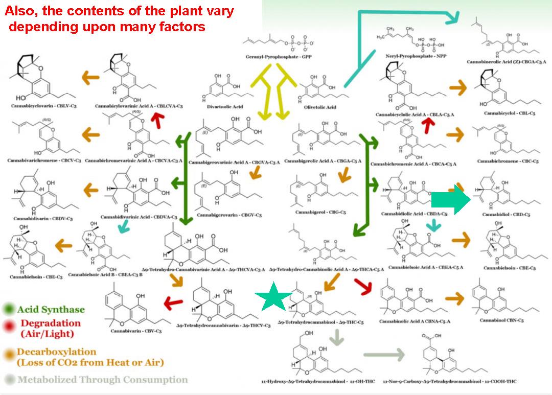 Science behind Medical Marijuana Oct_Page_03.png