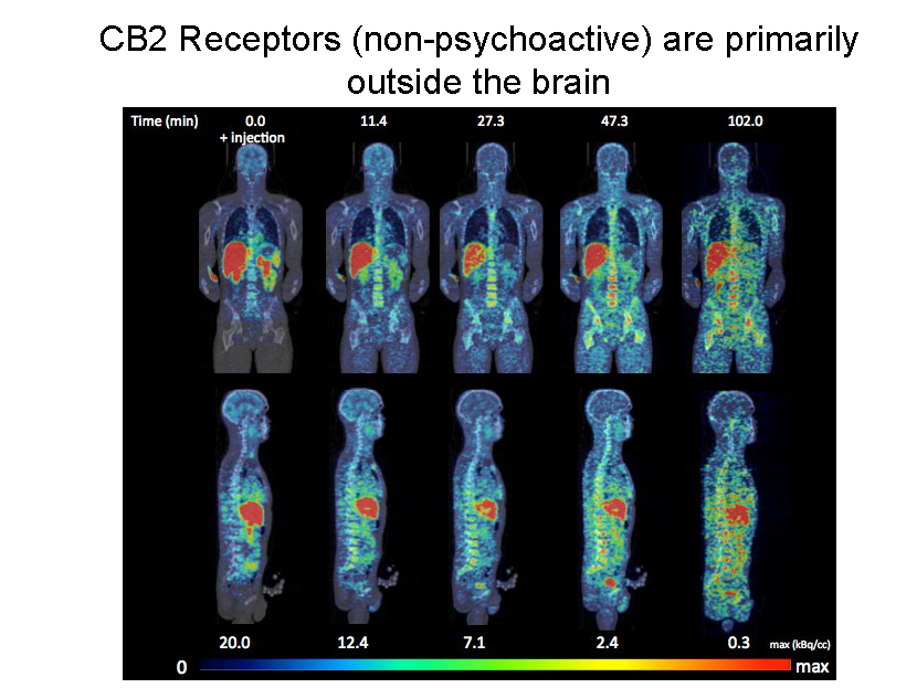 Science behind Medical Marijuana Oct_Page_05.png
