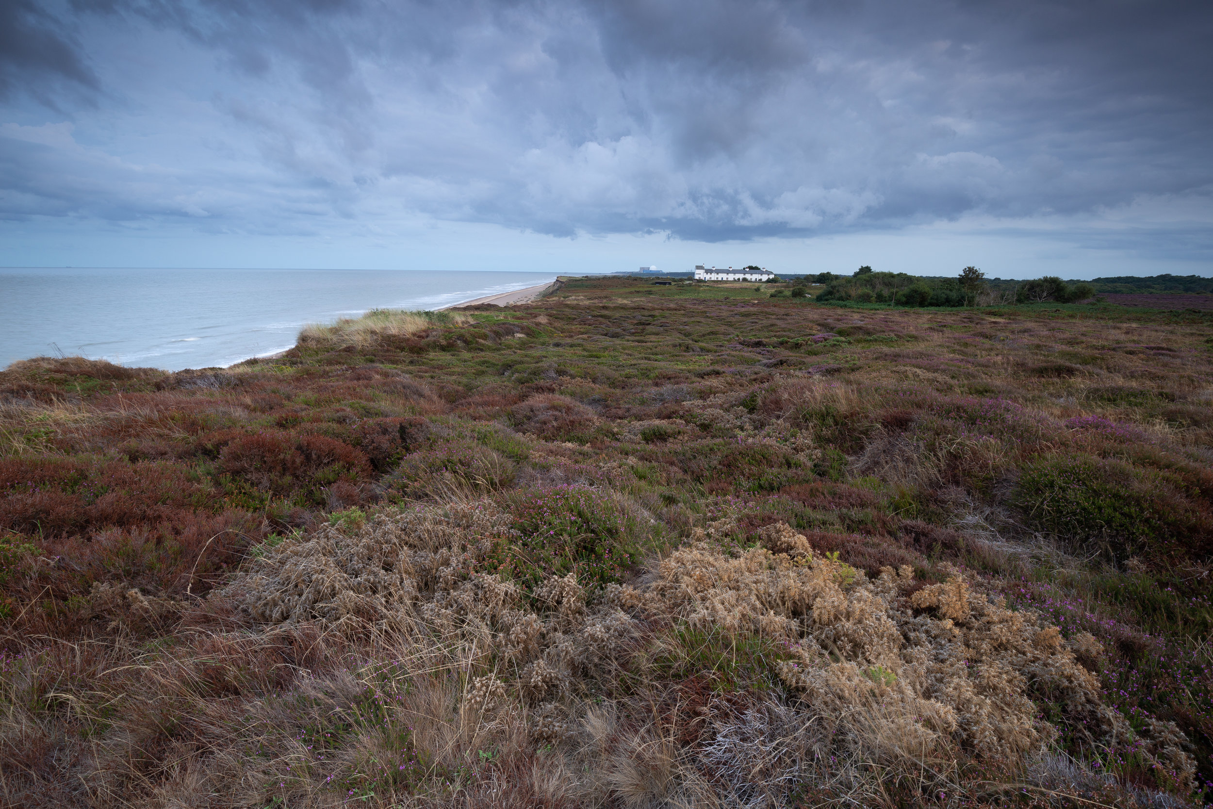 Before heather strikes, Dunwich Heath, Suffolk.