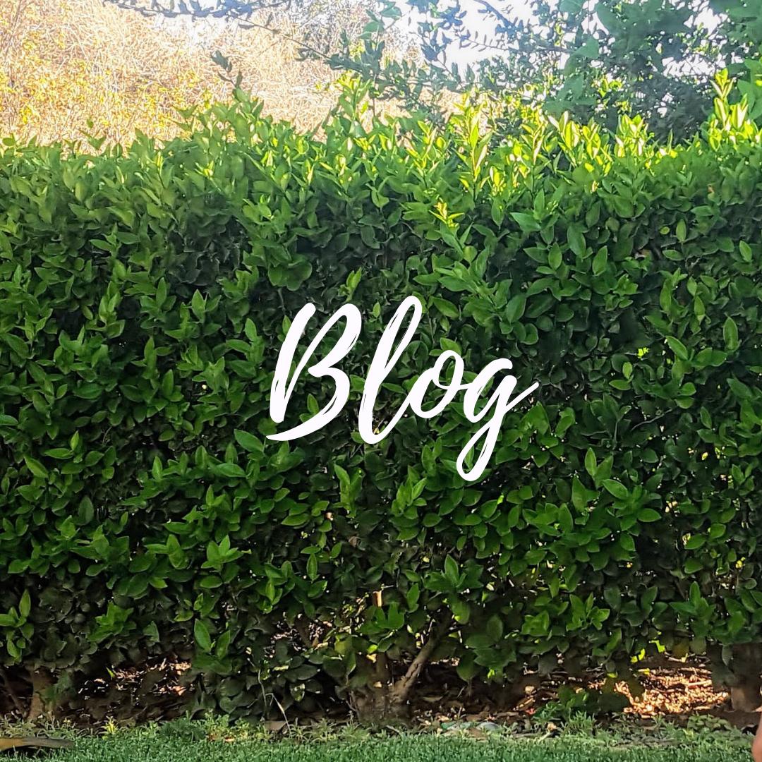 Voice-A-Dream-Blog.png